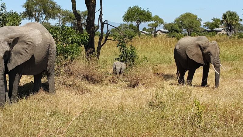 Слоны в Микуми