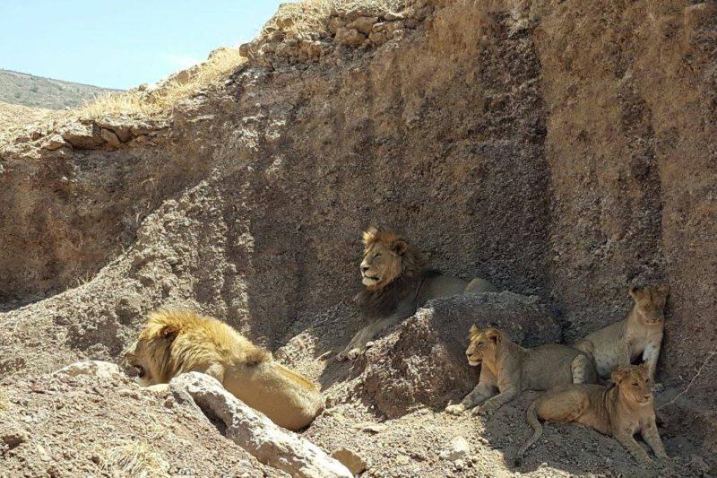 В Серенгети мы видели много хищников