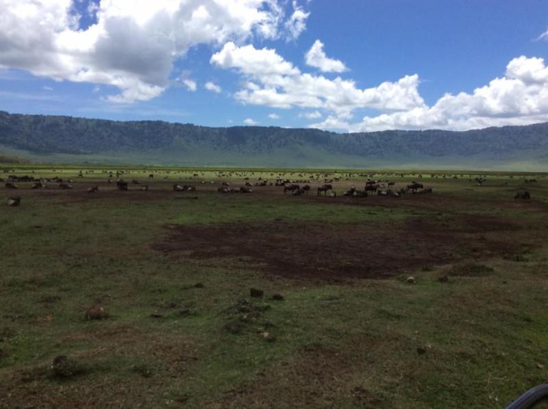 В кратере Нгоронгоро